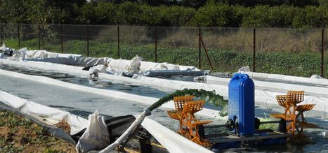 CCRES: Invest in Milking Microbes | Algae | Scoop.it