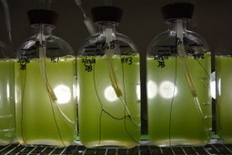 Enzyme discovery leads scientists further down path to pumping oil from plants | AgriLife.org | CALS in the News | Scoop.it
