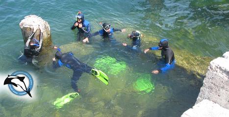 Laboratorios para Ciencias del Mar   Botánica Marina   Scoop.it