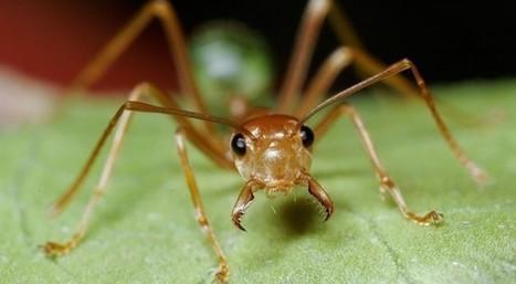 Les fourmis, une excellente alternative aux pesticides   EntomoNews   Scoop.it