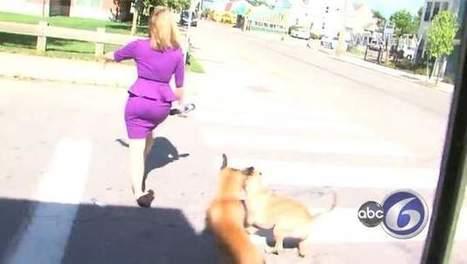 Woeste vrouw laat honden los op blonde nieuwsdame | MaCuSa kris | Scoop.it