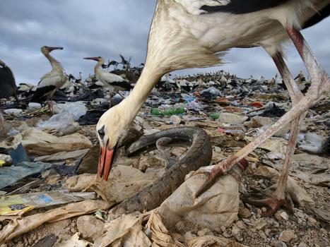 Le message caché des cigognes | Biodiversité | Scoop.it