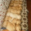 Some dogs sleep in the sopa | 2 dogs are very happy | Scoop.it