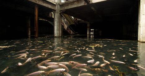 An Abandoned Bangkok Shopping Mall Hides a Fishy Secret | Art Installation | Scoop.it