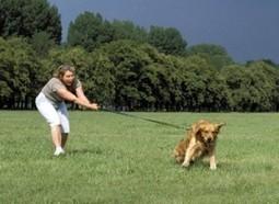 Perros reactivos durante el paseo : TiendAnimal   Perros   Scoop.it