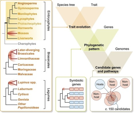 New Phytologist - Comparative phylogenomics of symbiotic associations | Host microbe interactions | Scoop.it