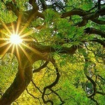 Japon - La forêt éternelle   ARTE   La parole de l'arbre   Scoop.it