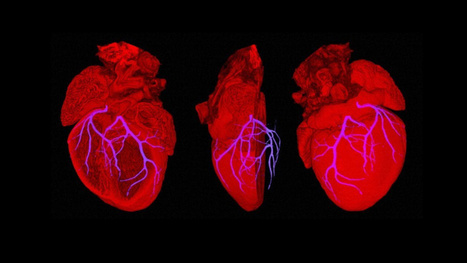 Breakthrough: Scientists have built a fully-functional mouse heart | Complex Insight  - Understanding our world | Scoop.it