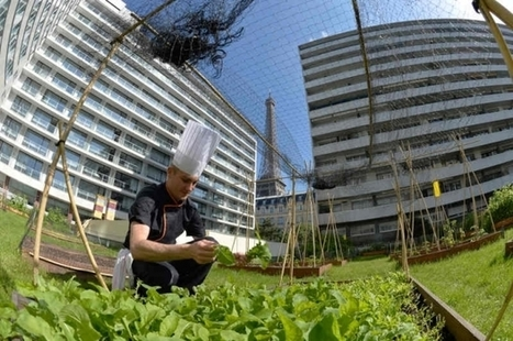 Chefs take to roofs of Paris with wave of gastro gardens (VIDEO) | Sustain Our Earth | Scoop.it