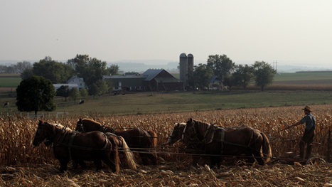 Could Amish Farm Dust Provide Relief from Asthma? | Arizona Public Media | CALS in the News | Scoop.it