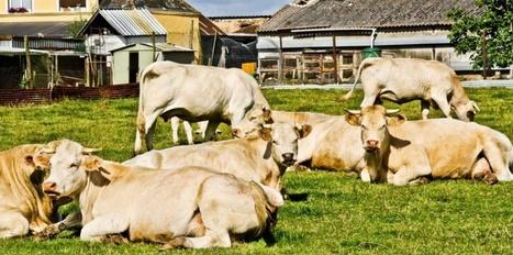 France : Elevage, agroécologie... Quelle loi pour l'agriculture de demain ? | Questions de développement ... | Scoop.it