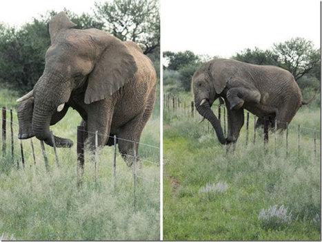 Namibian elephant in farmlands subject of hunting debate - Africa Geographic Magazine Blog   GarryRogers Biosphere News   Scoop.it