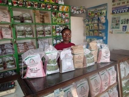 Un nouveau rapport révèle que l'industrie des semences africaine est désormais dominée par des start-up locales | Questions de développement ... | Scoop.it