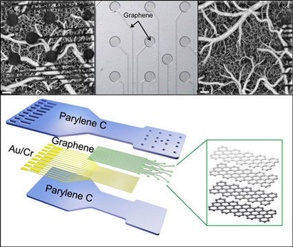 Atom-width nanotechnology sensor could provide unprecedented insights into brain structure and function   ExpDiM   Scoop.it