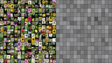 Machine learning researchers team up with botanists on flower-recognition project | Amazing Science | Scoop.it