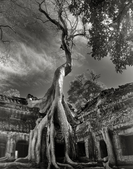 The Most Ancient and Magnificent Trees From Around the World | Messenger for mother Earth | Scoop.it