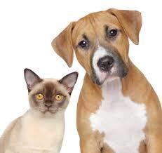 MillCreek Veterinary Hospital Mississauga for Affordable Pet Vet Service | Animal Hospital Mississauga - Affordable Pet Vet Services | Scoop.it