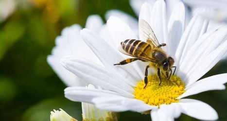 Biodiversité: députés et sénateurs en quête d'un compromis | Biodiversité | Scoop.it