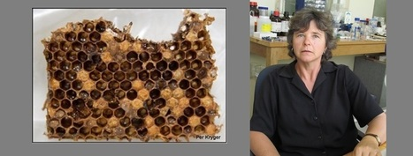 News - Bee industry needs to act quickly against... | Global change | Scoop.it
