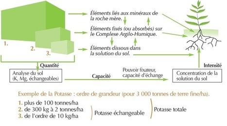 Le potassium et le magnésium - WikiLCA | agriculture de conservation | Scoop.it