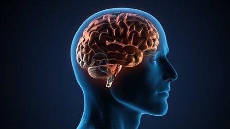 Notre cerveau, le fruit d'un travail d'équipe? | Fonctionnement du cerveau & états de conscience avancés | Scoop.it