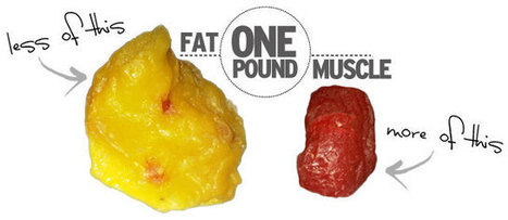 One Pound of Fat Versus One Pound of Muscle: Clearing up the Misconceptions | Wellness Life | Scoop.it