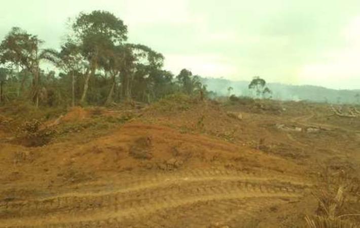 Le WWF, partenaire d'une entreprise d'exploitation forestière française qui détruit le territoire des 'Pygmées' baka | Survival International | Afrique | Scoop.it