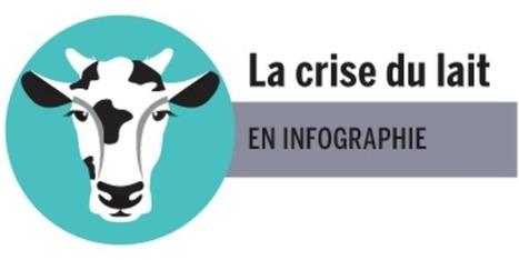 La crise du lait - Le monde | Le Fil @gricole | Scoop.it