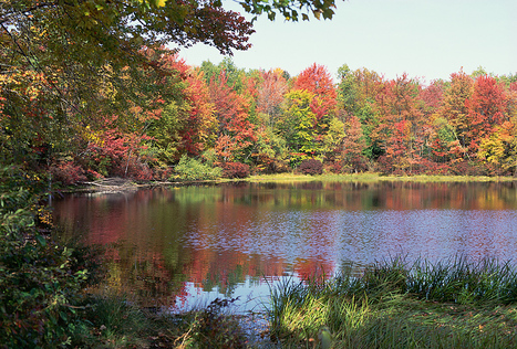 Travel Wisconsin: Fall Color Report | The Miracle of Fall | Scoop.it
