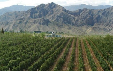 Ningxia introduces winery classification system | Grande Passione | Scoop.it