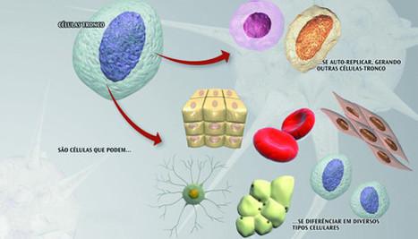 Stem cells in implant dentistry | Dental Tribune International | Dental Implants | Scoop.it