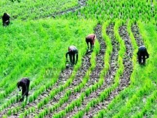 Un responsable d'un ministère fustige la négligence de l'agriculture nigériane | Questions de développement ... | Scoop.it