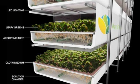Vertical Farming in Masdar City? AeroFarms' Soil-less Solution | Vertical Farm - Food Factory | Scoop.it