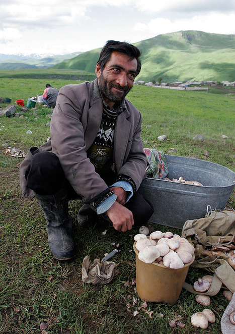 Armenia:  Mushroom production to develop | Mushroom cultivation in The Third World | Scoop.it