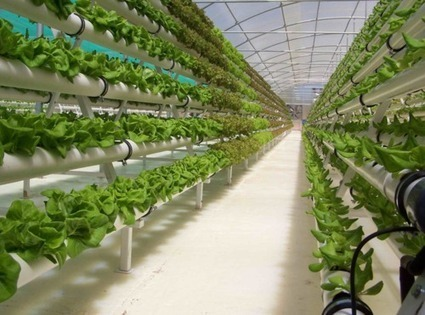 AGRITECTURE:, More people are considering hydroponic greenhouse... | Vertical Farm - Food Factory | Scoop.it