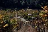 Sonoma: Compelling wines emerge from fog belt | Vitabella Wine Daily Gossip | Scoop.it