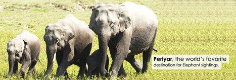Enjoy Wildlife Safari in India   jyoti   Scoop.it