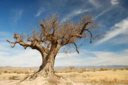 Civilizations rise and fall on the quality of their soil | Sustain Our Earth | Scoop.it