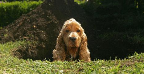 I perché cinofili: perché il cane scava in giardino? | Benessere animale | Scoop.it