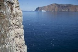 Arctic biodiversity under serious threat from climate change | Nature Animals humankind | Scoop.it