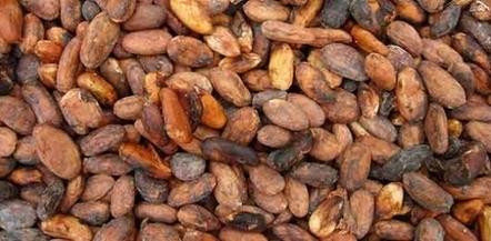 Travail des enfants : Mondelez à la traîner dans les plantations de cacao | agro-media.fr | Actualité de l'Industrie Agroalimentaire | agro-media.fr | Scoop.it