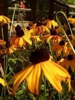 Organic Chemistry forHerbalists | Plantsheal | Scoop.it