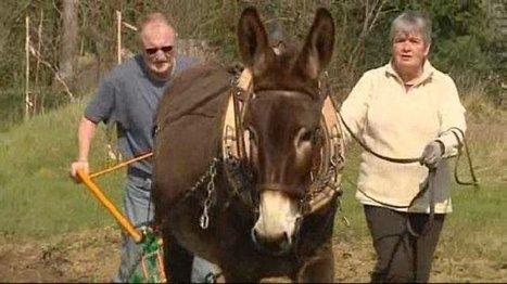 Villeneuve-sur-Lot : une école de labour avec un âne – France 3 Aquitaine | Le Fil @gricole | Scoop.it