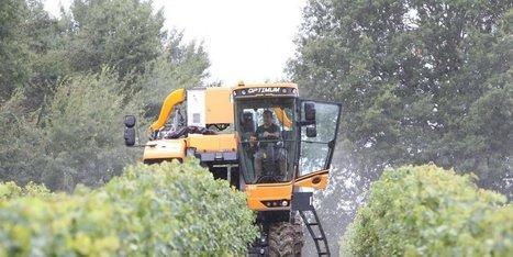 La météo plombe les vendanges 2016 dans le monde | Agriculture en Dordogne | Scoop.it