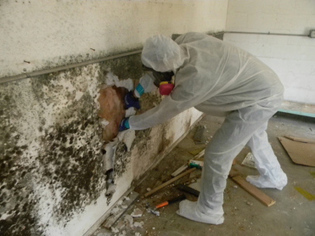 Mold Removal Company – tips to choose the right one | Emergency Management Disaster Services | Scoop.it