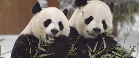 14 Best Python Pandas Features | PDG Web Development | Scoop.it