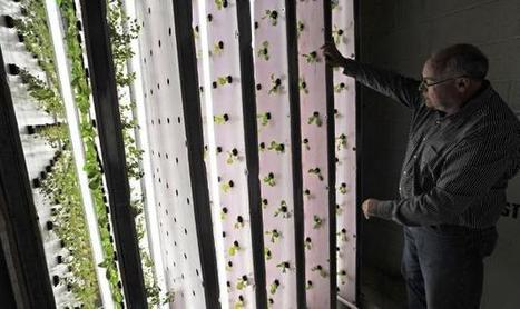 Maplewood warehouse turns into a growhouse | Growing Food | Scoop.it