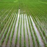 The History of Irrigation Systems | Exceptional Irrigation Systems | Scoop.it