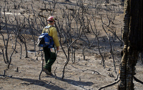 Areas Burned By Rim Fire See 'Unprecedented' Destruction | Sustain Our Earth | Scoop.it