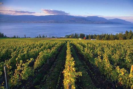 B.C. wine industry at a tipping point | In The Glass Wine and Spirits News | Scoop.it